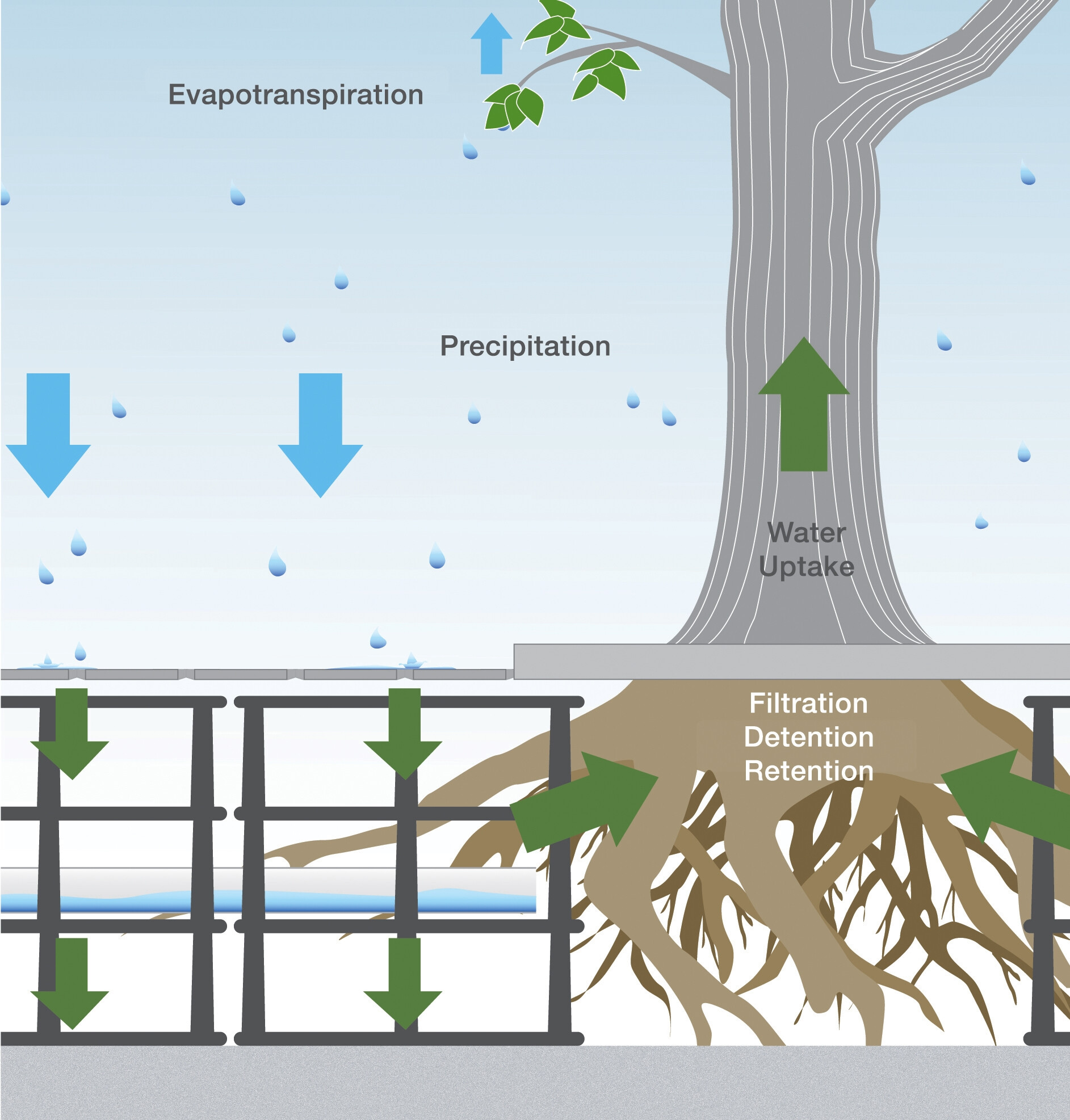 Silva Cell Tree + Stormwater Management System