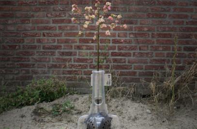 Bioplastic Planter