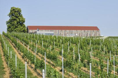 Marof Winery