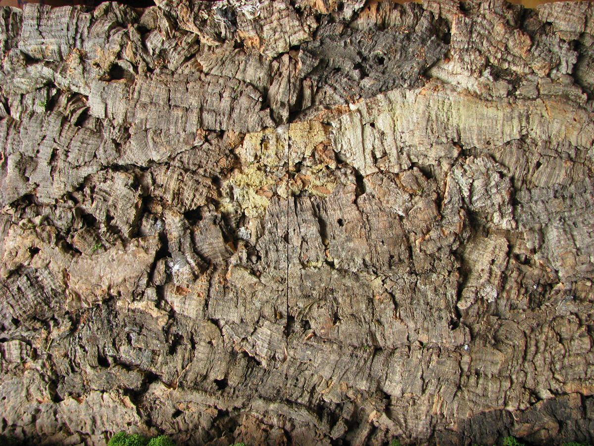 Korkbaumrinde - Natural cork wall cladding
