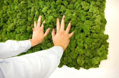 Evergreen - Natural moss-walls