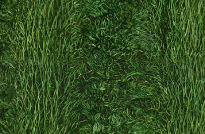 Loofha green