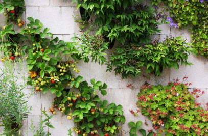 THE AFFORDABLE GREEN WALL SYSTEM