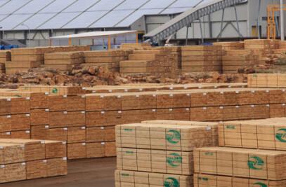 Radiata Pine – Premium Industrial Grade