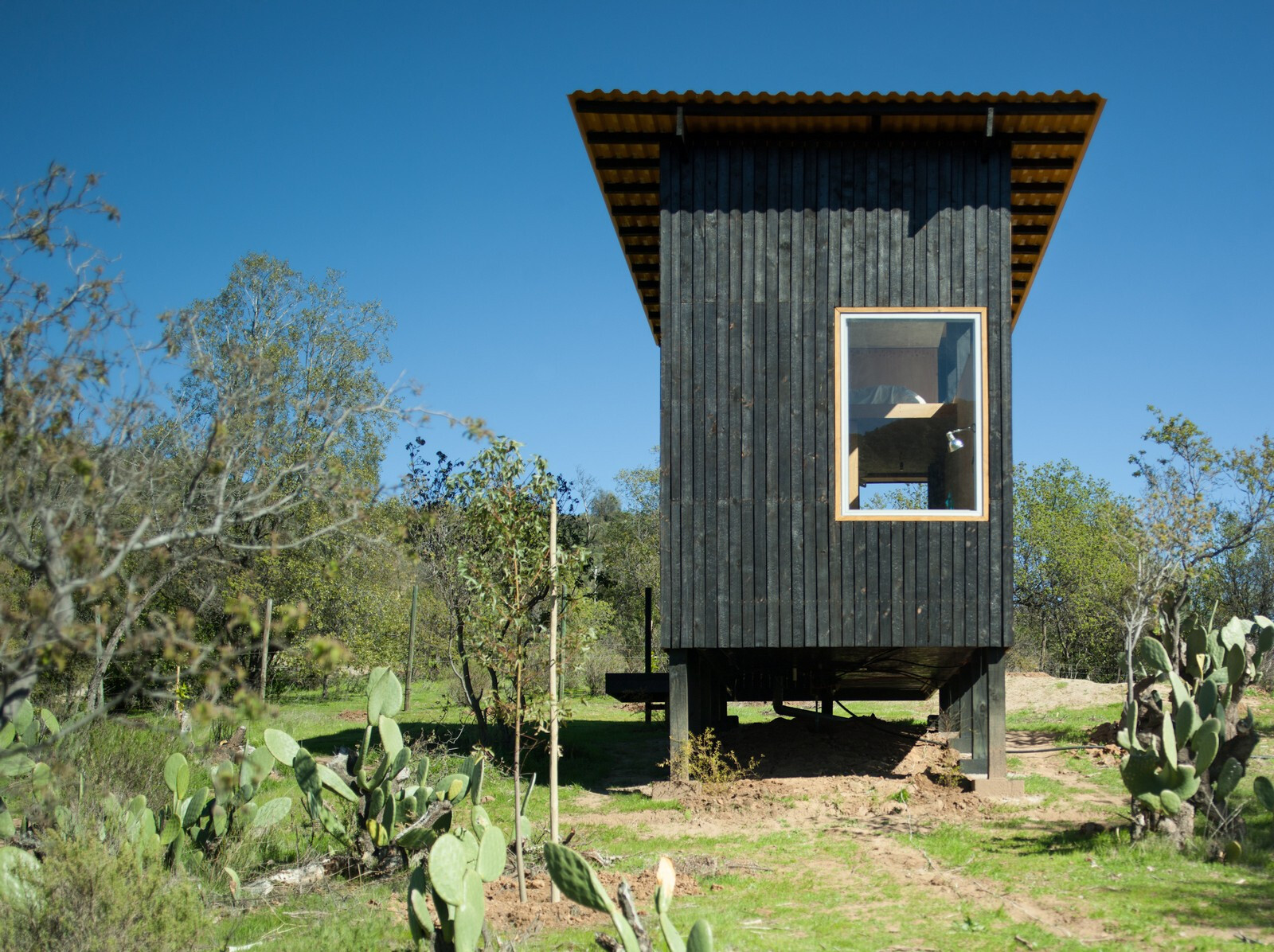 Charred Cabin