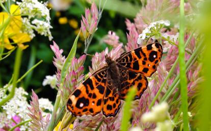 Bees & Butterflies blanket
