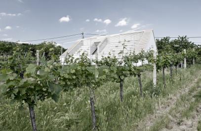 Weinblich