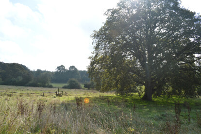 Existing Site for Proposed New Build Home