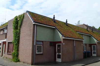 Ecospan Greenroof
