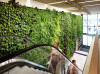 Plantwall, vertical garden
