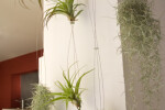 Airplant, steel wire