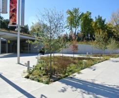 Entrance Rain Gardens