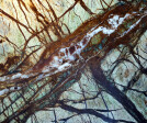 """On the marble fireplace surround: """"There are so many possible readings, it could be an aerial photo or a topographic map, but with the current snowy winter weather, it can also appear to be a tangled mash of tree branches.""""  – Gary Wolf"""