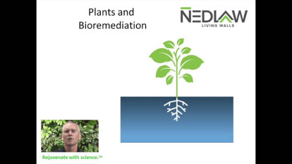 The Science Behind the Nedlaw Living Wall Biofilter