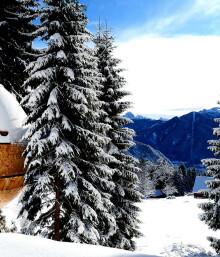 Alpine Architecture