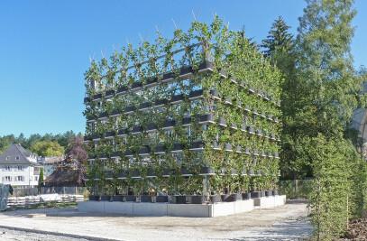 Plane Tree Cube