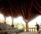 giant bamboo shoots off the concrete column