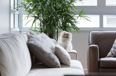 Apartamento Bom Fim – Bom Fim Apartment