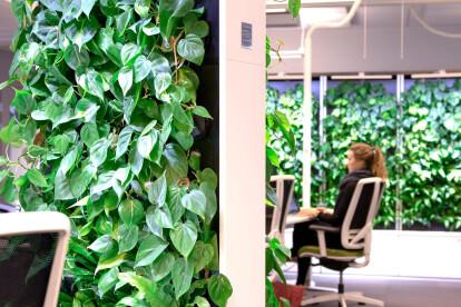 Naava Green Healthtech Wall