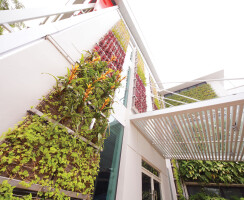 Green walls reduce heat transfer from the building envelope into the interior