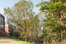 Xiao Jing Wang University