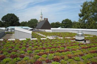 Extensive Garden Roof® Assembly