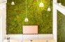 Green Wall with 100% natural mummy-moss