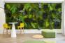 Moss&Plants