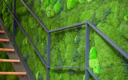 Vertical garden Basic Moss