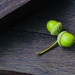 Bog oak luxury