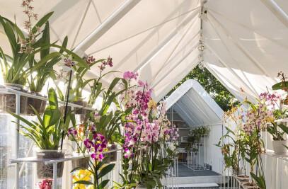 Greenhouse Orchid Punta Del Este