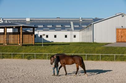 VG Horse Club